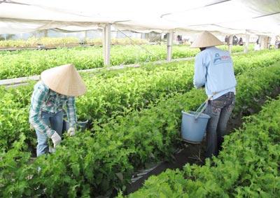 lao động làm nông nghiệp