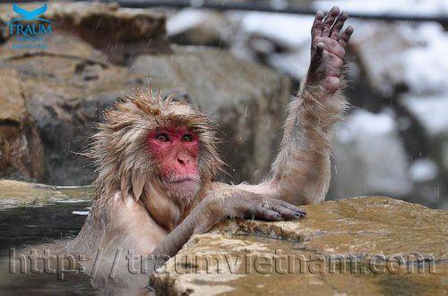 Công viên khỉ Jigokudani ở Nhật Bản