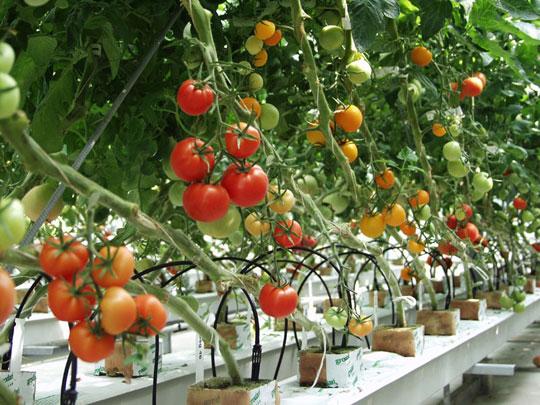trang trại okano tuyển 01 nam làm nông nghiệp