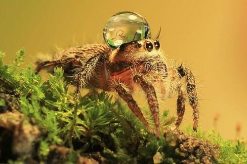 thấy nhện vào buổi sáng