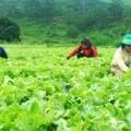 tuyển 01 nam làm nông nghiệp tại chiba