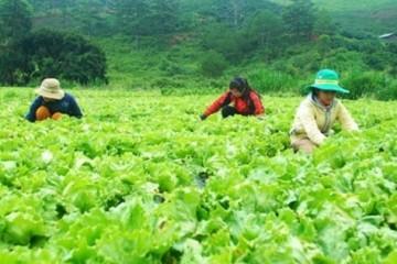 Tuyển 01 nam làm nông nghiệp tại Chiba phỏng vấn 25/05