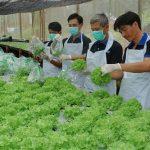 tuyển 01 nữ trồng rau tại Oita Nhật Bản