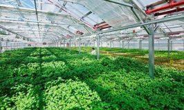 Tuyển 10 nam làm nông nghiệp gieo trồng tại Nhật Bản pv 20/07