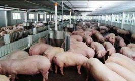 Tuyển 3 nam làm chăn nuôi tại Nhật lương cao pv 20/07