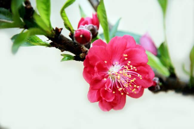 Thông báo lịch nghỉ tết Traum Việt Nam