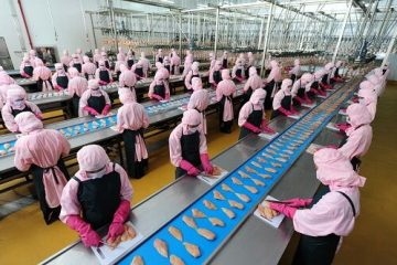 Traum tuyển 24 lao động phỏng vấn làm chế biến thịt gà ở Niigata Nhật Bản