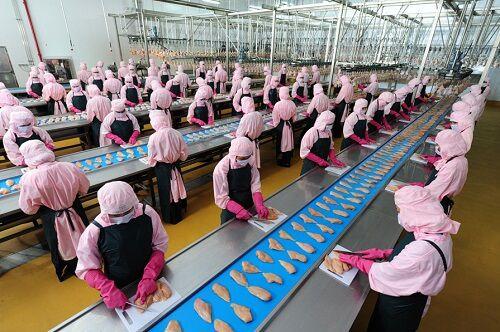 Traum tuyển 24 lao động phỏng vấn làm chế biến thịt gà ở Nigata Nhật Bản