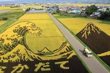 Tanbo Nhật Bản – Nghệ thuật trên cánh đồng lúa ở Nhật