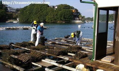 Vịnh biển Ago, tỉnh Mie Nhật Bản