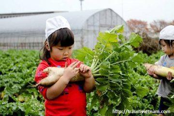 Người Nhật phòng bệnh cho trẻ nhỏ ra sao