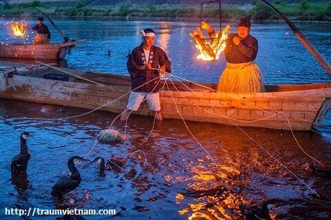Bắt cá bằn chim cốc trên sông Nagara
