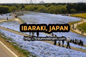 Danh sách những trường Nhật ngữ ở Ibaraki Nhật Bản
