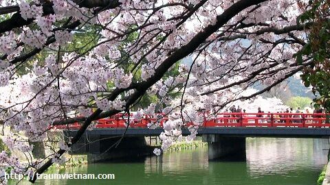 Tỉnh Aichi Nhật Bản