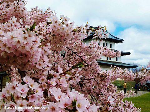 Tỉnh Hiroshima Nhật Bản - Hòa bình đã trở lại