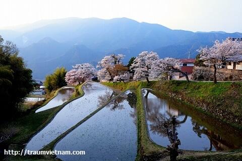 Tỉnh Mie Nhật Bản - Vùng đất huyền bí