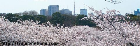 Tokyo Nhật Bản - trái tim của nước Nhật