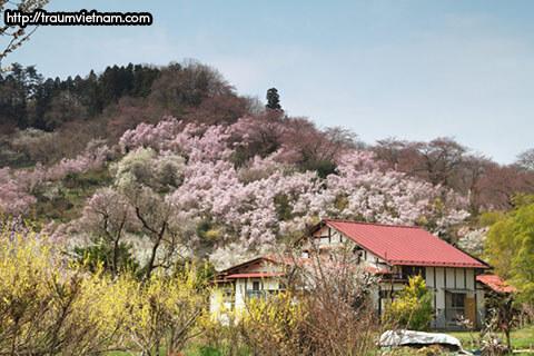 Núi Shinobu - thành phố Fukushima