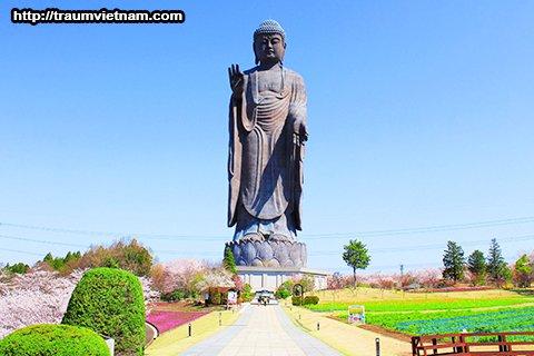 Tượng phật lớn nhất thế giớiUshiku Daibutsu