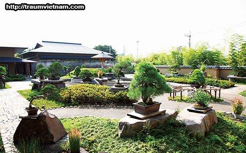 Bảo tàng nghệ thuật Bonsai Omiya - làng Bonsai (Saitama)