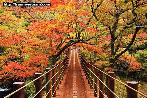 Cầu treo Ryujinkyo - thung lũng Hananuki