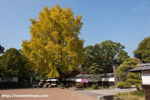 Dinh thự cổ của gia tộcHosokawa Gyobu