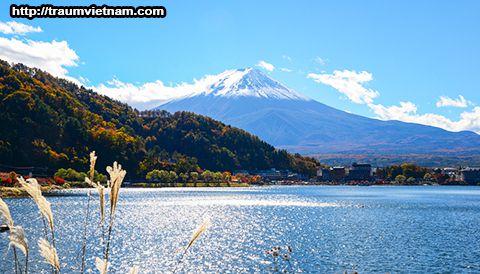 Tỉnh Yamanashi Nhật Bản - Thiên đường rượu vang và trái cây