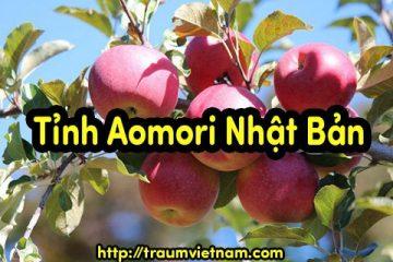 Tỉnh Aomori Nhật Bản – quê hương của táo