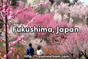 Tỉnh Fukushima Nhật Bản – Nơi sự sống hồi sinh