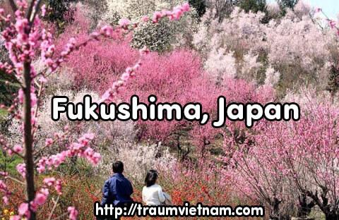 Tỉnh Fukushima Nhật Bản - Nơi sự sống hồi sinh