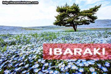 Tỉnh Ibaraki Nhật Bản – bốn mùa khoe sắc