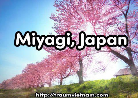 Tỉnh Miyagi Nhật Bản - quyến rũ và lôi cuốn