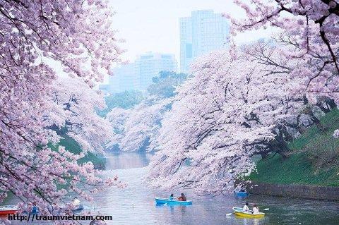 Tỉnh Yamagata Nhật Bản - vùng đất của onsen và hoa anh đào
