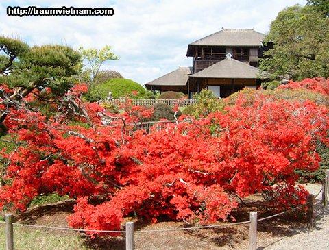 Vườn Kairakuen - Ibaraki Japan