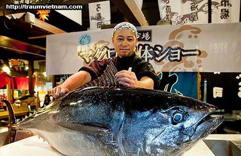 Cá ngừ Wakayama Japan