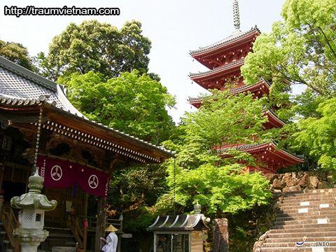 Chùa Chikurin-ji - tỉnh Kochi Nhật Bản