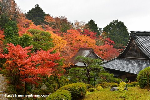 Chùa Hyakusai-ji - tỉnh Shiga Nhật Bản