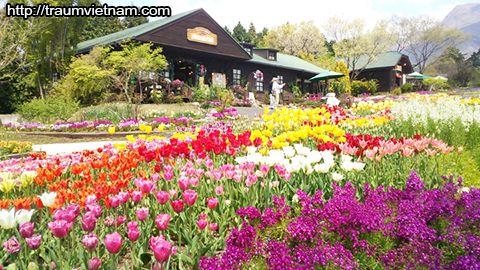 Công viên hoa Kuju