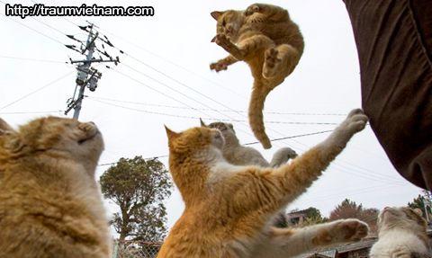 Đảo mèo Aoshima - tỉnh Ehime Nhật Bản