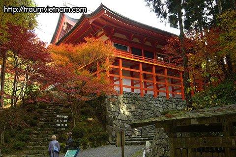 Lễ hội lá đỏ ở đền Hiyoshi - tỉnh Shiga Nhật Bản