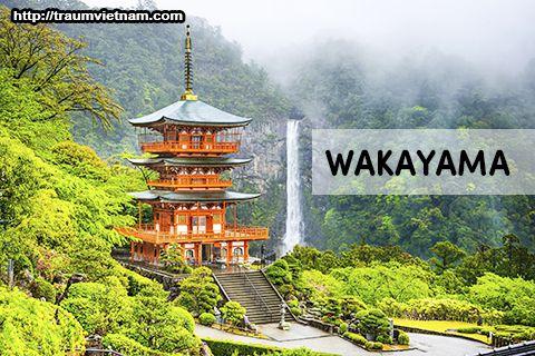 Tỉnh Wakayama Nhật Bản - vùng đất của trái cây và cá ngừ