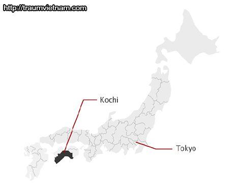 Vị trí địa lý của tỉnh Kochi Nhật Bản