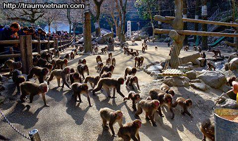 Vườn thú tự nhiên Takasakiyama