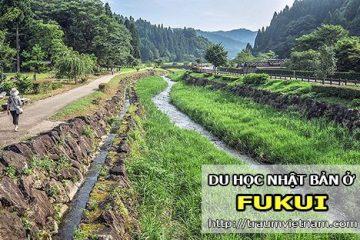 Du học ở Fukui Nhật Bản – vùng đất của hạnh phúc