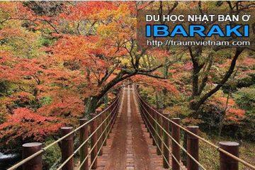 Du học ở Ibaraki Nhật Bản – bốn mùa rực rỡ