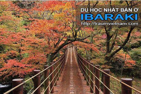 Du học ở Ibaraki Nhật Bản - bốn mùa rực rỡ