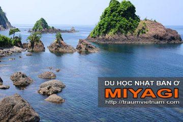 Du học ở Miyagi Nhật Bản – vùng đất quyến rũ
