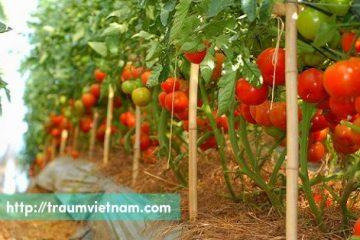 Tuyển 39 nữ làm nông nghiệp gieo trồng ở Gifu phỏng vấn 10/05