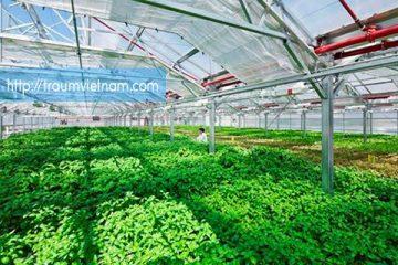 Tuyển 6 nữ phỏng vấn trồng rau trong nhà kính tại Oita 5/2018