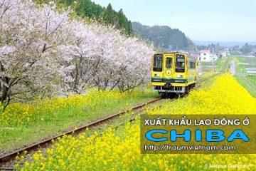 Xuất khẩu lao động ở Chiba Nhật Bản – Bay nhanh